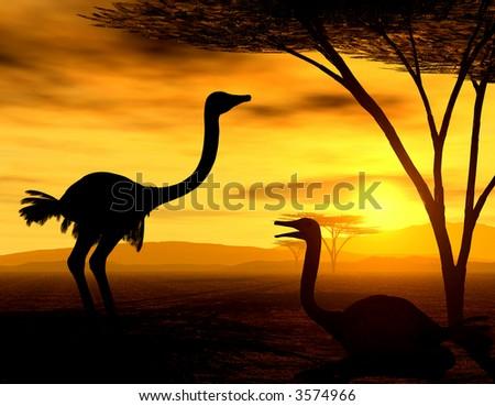 African Spirit - Ostrich resting - stock photo