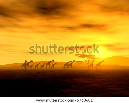 African Spirit - The Walking Tour of African Giraffes - stock photo