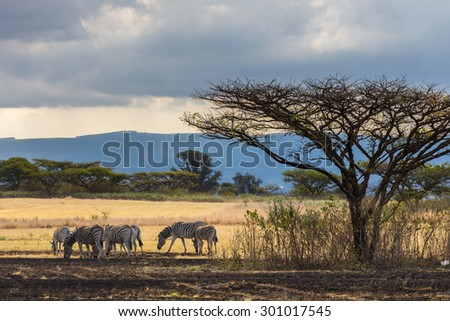 African Steppe