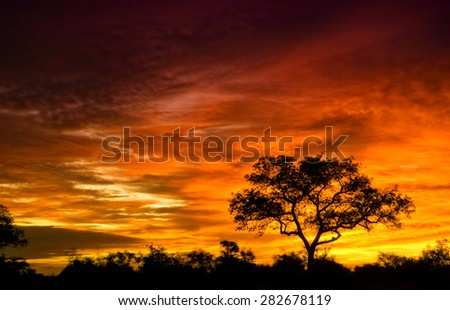 African sunrise in the Kruger National Park, South Africa - stock photo