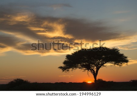 African sunrise over an Acacia tree