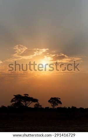 African sunset in Hwange national park, matabeleland, North Zimbabwe - stock photo