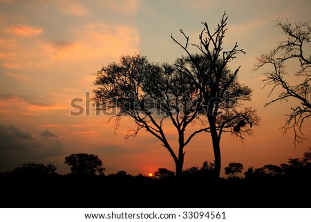 African Sunset, Sabi Sand Reserve, South Africa
