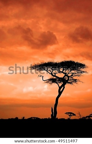 African sunset with silhouette of acacia - stock photo