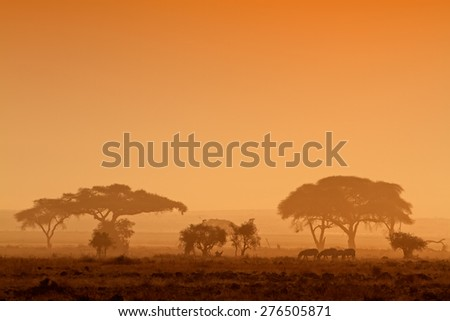 African sunset with silhouetted trees and zebras, Amboseli National Park, Kenya - stock photo
