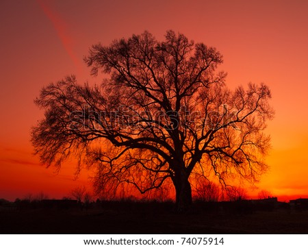 African sunset with tree - stock photo