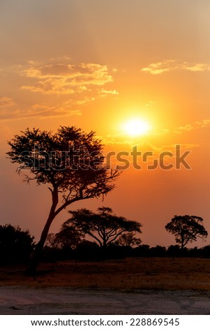 African sunset with tree in front, Hwange national park, Matabeleland, North Zimbabwe - stock photo