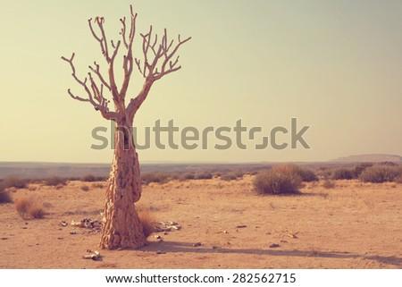 African tree - stock photo