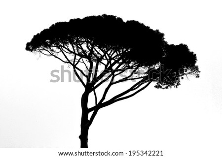 african tree silhouette isolated on white - stock photo