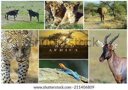 African wild animals safari collage, large group of fauna - stock photo