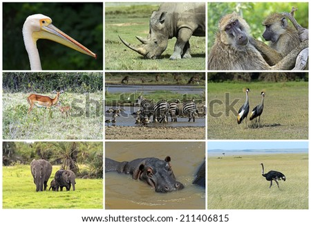 African wild animals safari collage large group of fauna - stock photo