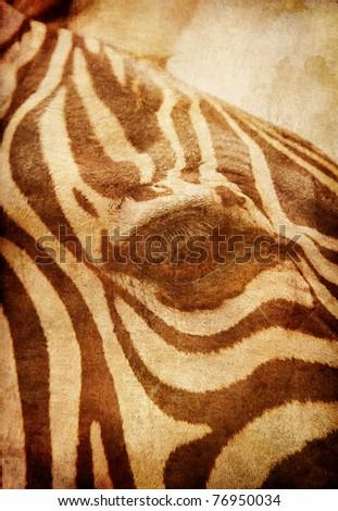 African Zebra - stock photo