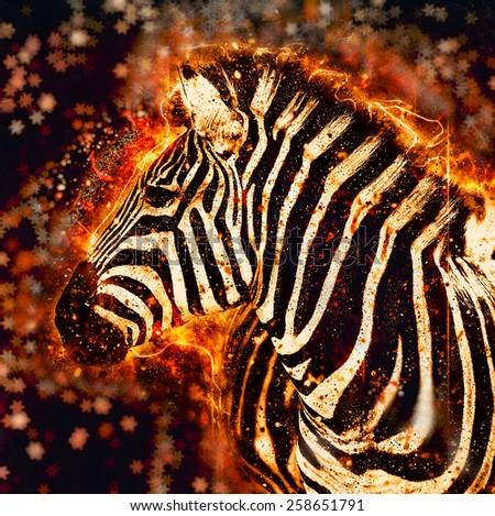 African zebra illustration - stock photo