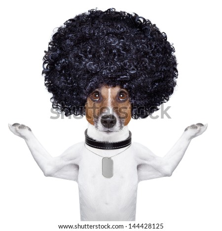 afro look dog with very big curly black hair - stock photo