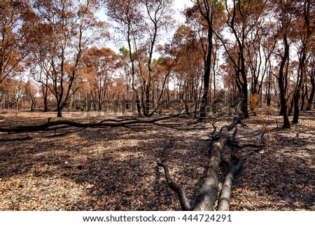 After fire burn forest become arid.