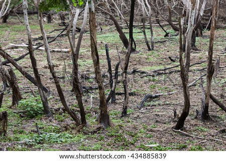After Forest Fire - stock photo