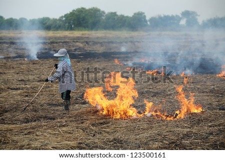 after harvest,farmer burning straw in rice plantation. - stock photo