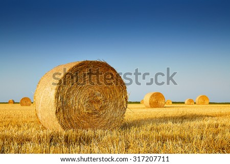 After harvesting of wheat grain in summer - stock photo