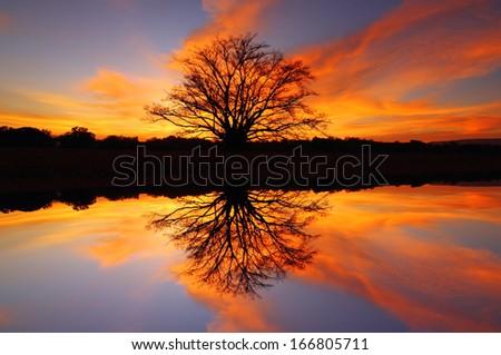 After sunset, the twilight light  trees. - stock photo