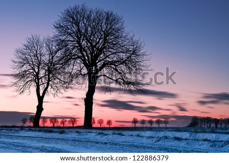 after sunset trees at winter - stock photo