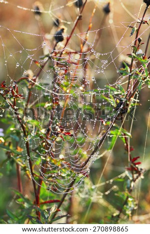 After the rain, the hidden beauty of this cobweb appears - stock photo