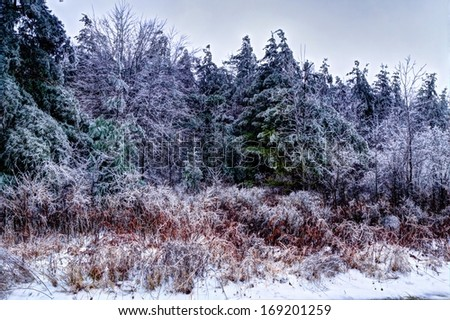 After The Snow.  Gorgeous winter landscape after a fresh fallen snow,    - stock photo