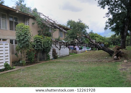 After the storm - the tree has fallen over the terraced houses. From a housing area in Tanzania, East Africa