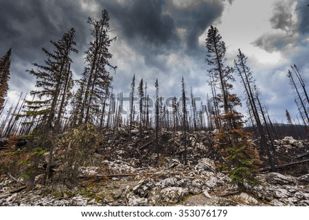 Aftermath of a forest fire, Jasper National Park Alberta Canada - stock photo