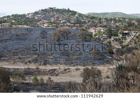 Aftermath of a forest fire near Robledo de Chavela  in Spain  which destroyed 6000 hectares of dry pine forest and came close to the town. It was set deliberately.