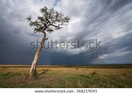 Afternoon storms over the Masai Mara with tree in foreground - stock photo