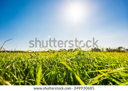 Afternoon sun over the meadow. View from ground level, focus on the grass - stock photo