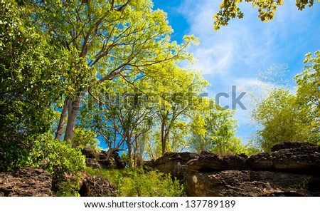 afternoon sunbeam shine thru the green forest. - stock photo