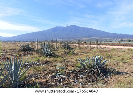 Agave farm fields and Tequila Volcano outside Amatitan Mexico - stock photo