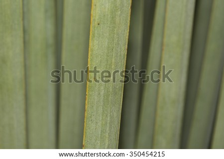 agave plant green leaf detail close up - stock photo