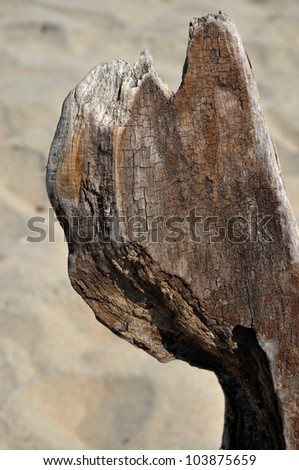 Aged and weathered driftwood on the beach - stock photo