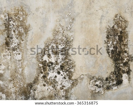 Aged cement wall texture with mold - stock photo