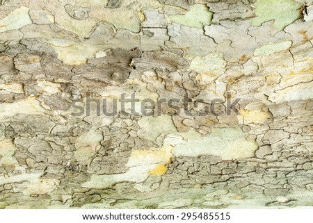 Aged cracked mossy tree bark texture closeup - stock photo