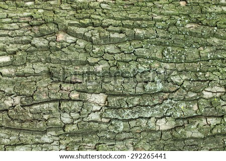 Aged cracked tree bark texture - stock photo