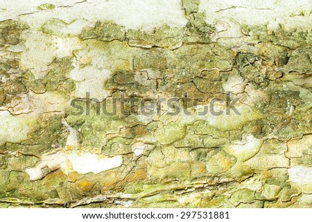 Aged green mossy tree bark texture closeup - stock photo