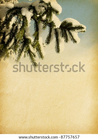aged paper texture with spruce - stock photo