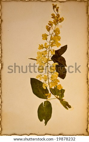 Aged Pressed Flowers - stock photo