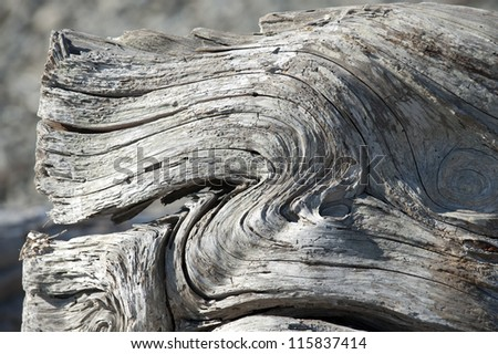 Aged tree-wood on the beach
