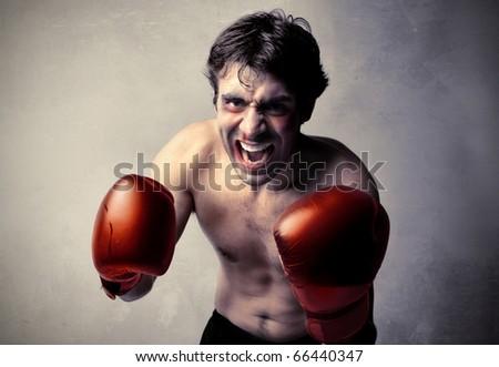 Aggressive boxer on guard - stock photo