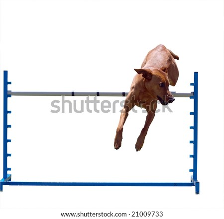 Agility Dog over a Jump Isolated with clipping path - stock photo