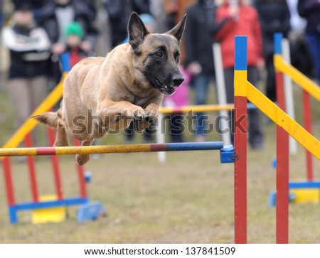Agility - Dog skill competition. - stock photo