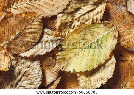 aging leaves texture close up
