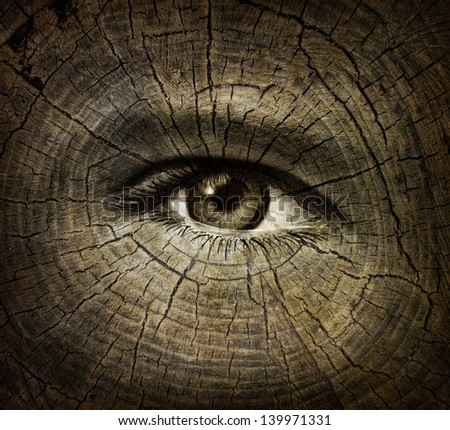 Aging or ageing concept as an open human eye on a wood grain texture of old tree rings as a health care and medical idea of getting older and the changes or decline in function in a person over time. - stock photo