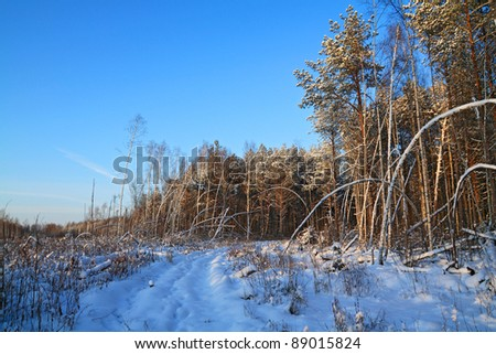 aging rural road in pine wood - stock photo