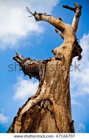 Aging Tree - stock photo