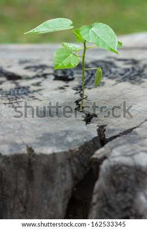aging wood cracks and tree background